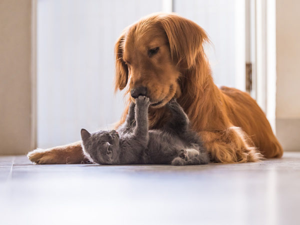 Family Dog For Cat Person